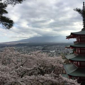 仲人士とめ、初めての新倉山浅間公園桜まつりに行ってきた
