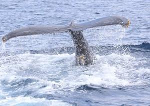 大興奮、大迫力のクジラでした!