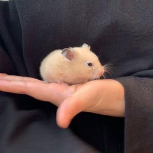 comachiハムちゃんを抱っこしに行く~☆