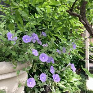 【おうちで過ごそう⑧】5月の花ダイアリー♡