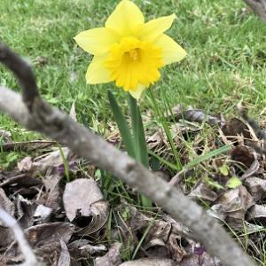 春はすぐそこ