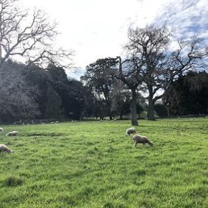 Cornwall Parkのお散歩