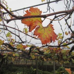 葉が落ちた