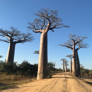 念願のマダガスカル