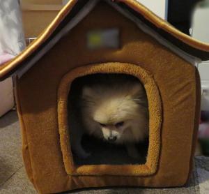 My House・Ⅱ。