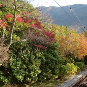 箱根のもう一つのお楽しみ