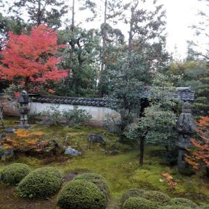 【緊急告知】11月19日 大雄院(京都市)の限定達磨御朱印は郵送対応