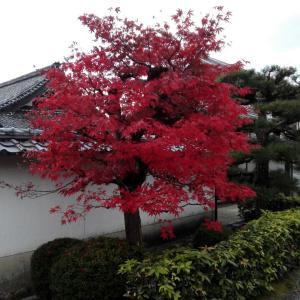 11月19日 養徳院(京都市)でいただいた素敵な見開き御朱印