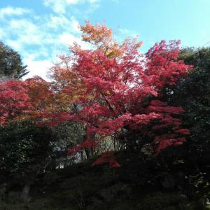 11月19日 霊鑑寺(京都市)でいただいた御朱印