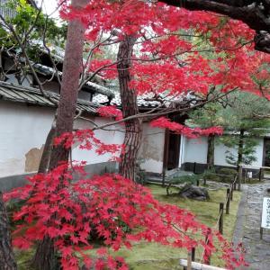 12月7日 桂春院(京都市)でいただいた素敵な書き置き御朱印