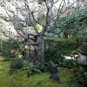2月17日 妙心寺桂春院(京都市)でいただいた御朱印