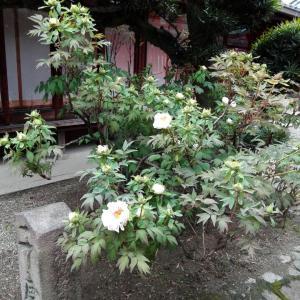4月1日 御霊神社(奈良市)でいただいた月替わり御朱印
