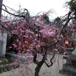 4月1日 祟道天皇社(京都市)でいただいた月替わりの御朱印