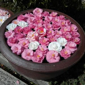 4月2日 霊鑑寺門跡(京都市)でいただいた御朱印帳と御朱印