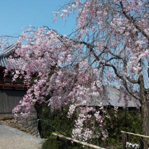4月8日 矢田寺北僧坊(大和郡山市)でいただいた新しい書き置き御朱印