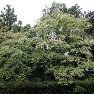 6月12日 妙心寺桂春院(京都市)でいただいた見開き御朱印
