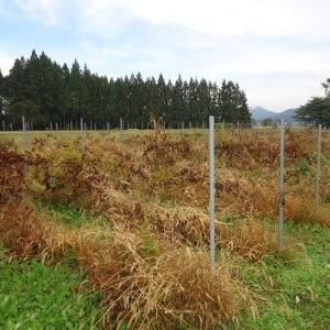 今年も畑の冬支度が始まりました
