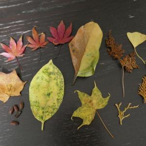 秋を感じる