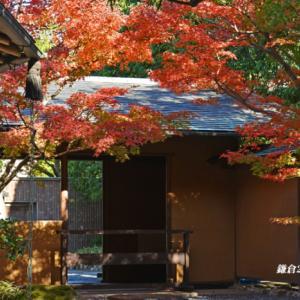 穴場の場所 『そうだ 鎌倉、行こう』