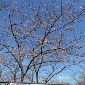 敷地内の開放中止『走水水源地 桜2020』