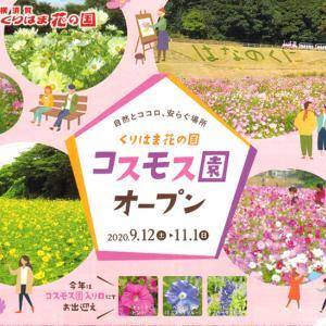 コスモス園 オープン『くりはま花の国2020』