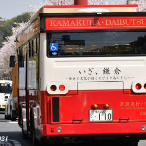 段葛の桜満開 『そうだ 鎌倉、行こう 2021』