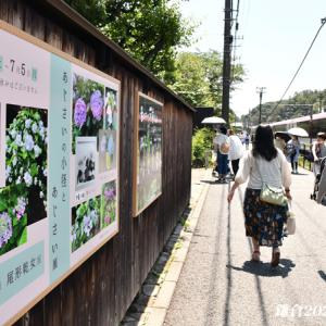 ひな祭り 『そうだ 鎌倉、行こう 2021』