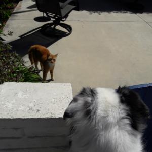 ネコは友達?