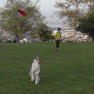 公園でフリスビー