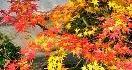 赤と緑のコントラスト:クリスマスと、秋の京都の紅葉と苔