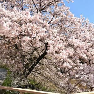 御朱印ラン〜母の桜とおふさ観音