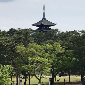 奈良公園で新発見