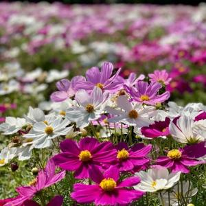やっぱり花に癒される