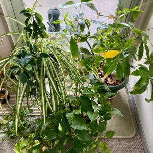 なんとか育ってくれてる植物たち
