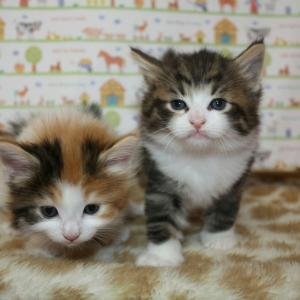 可愛い子猫ちゃんがいっぱいスタンバイ