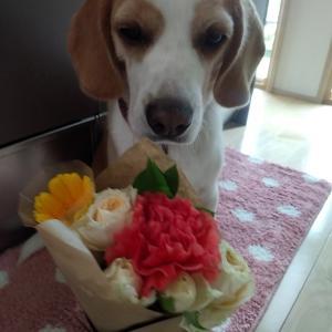 お花の定期便 ♯2