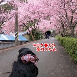 桜とトンネル