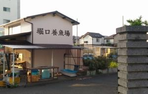 堀口養魚場GW頒布会(R01)