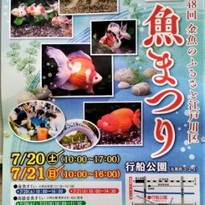 江戸川区金魚まつり R01年