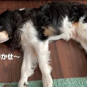 ランさんの尿検査結果~(^-^)