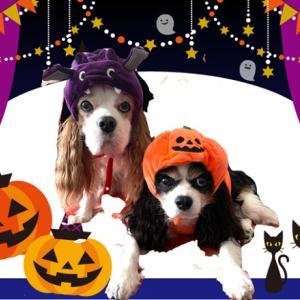 Happy Halloween(^-^)
