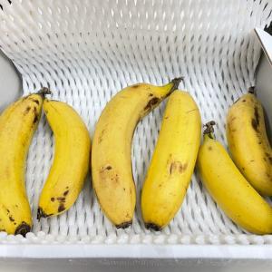 皮ごと食べれるバナナ