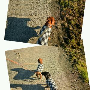 ★☆★ スリングで爆睡しながら散歩する次女(^O^)/ 警備員と大型犬♪ ★☆★