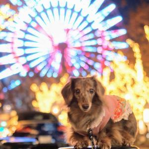 晩秋の秋♪ワンコとおでかけ@神戸ガス燈通りのイルミネーション
