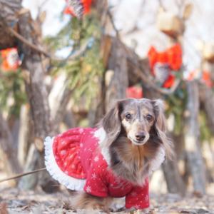 ワンコと冬旅♪クリスマス気分で萌木の村へ