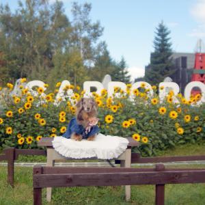 ワンコと秋の北海道旅♪札幌@国営滝野すずらん丘陵公園