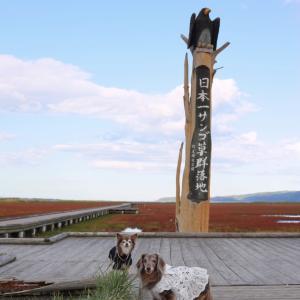 ワンコと秋の北海道旅♪さらに北上~網走でサンゴ草とひまわり畑