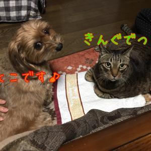 師走 10日  二人仲良く病院通い (^^;;