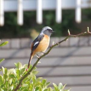冬庭の小鳥