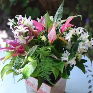 アンスリウムやデンドロと観葉植物
